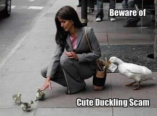 cute-duckling-scam